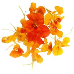 Edible Nasturtium flowers.  Flower petals and leaves are edible raw and taste quite peppery.  Some people use the pickled nasturtium seeds in place of capers.