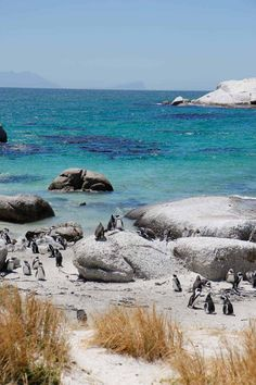 Cape Town, South Africa A Perfect Itinerary for First-Timers Visit South Africa, Cape Town South Africa, Places To Travel, Places To Go, Boulder Beach, Africa Destinations, Travel Destinations, Africa Travel, Strand