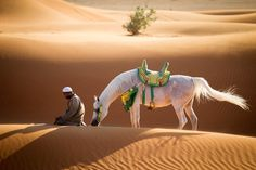 """Picture of a man kneeling in front of a white horse in the desert by Glenn Jacobs. """"In the photograph is the mare Egyptian Art with a kneeling Abdul Salam from Sudan,"""" the Your Shot community member writes. """"The mare is wearing an authentic saddle that was gifted by the Royal Stables of Morocco … This image reflects, in my opinion, the significant power that the Arabian horse has to unite different cultures and [inspire us] to appreciate each other in a peaceful manner"""