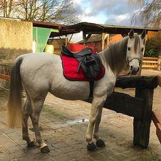 Instagram media by koxabella - Weihnachtstagausritt inkl. Sonne, Orkanartige eiskalte Böen, Regen, Hagel und jeder Menge Matsch! Aber heute hatte ich nette Begleitung und wir hatten trotzdem richtig viel Spaß und die Pferde waren auch Mega zufrieden #ausritt #ausreiten #pferde #pferd #galopp #trab #araber #arabian #arabianhorse #horse #horses #horselife #horsesofinstagram #horseriding #horsebackriding #horsephotography #horsepower #horselove #horselover #horsestagram #equestrian…