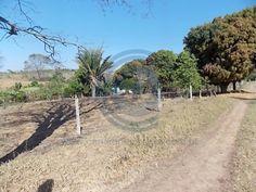 São 16,68 alqueires goiano, possui uma casa sede,uma casa de caseiro, rego d%9água, pomar com boa variedade de frutas, terra cercada na aroeira, tem ainda 5 divisões de pasto, curral, ótima oportunidade. Falar com Laesse Junior corretor de imóveis creci 22395 Fones: (62) 9245-6963 whatsapp / 8214-9218 ou www.candidoeoliveira.com.br