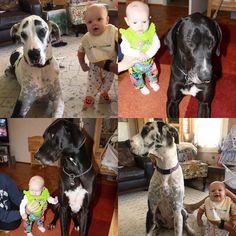 #Diesel & #Chicky and now #NataliaRae & #Ivan #greatdanesandkids #greatdanesofinstagram #greatdane #notadal... Great Dane Dogs, Puppy Breeds, Diesel, Puppies, Kids, Animals, Diesel Fuel, Young Children, Cubs