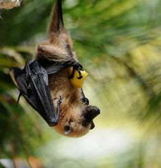 bat with fruit