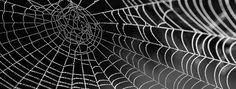 #Informazione e #cultura: come sarà il #web tra 10 anni? (immagine via Pixabay