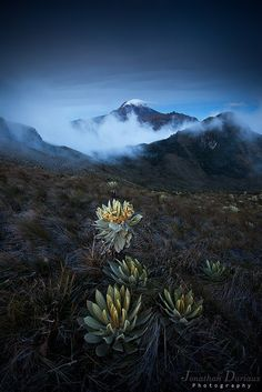 Volcan del Tolima by Jonathan Duriaux / Colombia South America, South America Travel, Magic Places, Colombia Travel, South Of The Border, Equador, Palmiers, Holiday Travel, Travel Around