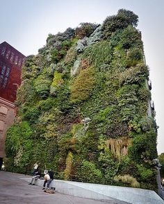 The amazing benefits of urban Vertical Gardens are; Aesthetic Improvements Reduction of the Urban Heat Island Effect Improved Exterior Air Quality Local Job Creation Improved Energy Efficiency Building Structure Protection Improved Indoor Air Quality Noise Reduction Marketing Potential Increased Biodiversity Improved Health and Well-Being Urban Agriculture Onsite Wastewater Treatment by green_initiative