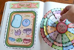 Animal and plant cell More