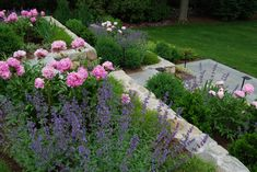 Carey Ezell Landscape Design Peonies With Cat Mint Landscape Design Tiered Garden Landscape Services