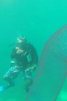 That Pyrosome Spotted In The Philippines May Actually Be A Mass Of Squid Eggs (UPDATED)