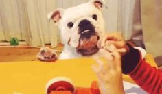 Bulldog Down! Sorry Dog but it's just freaking funny! | 32 GIFs Guaranteed To Make You Laugh Every Time