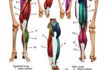 Leg muscle atrophy symptoms