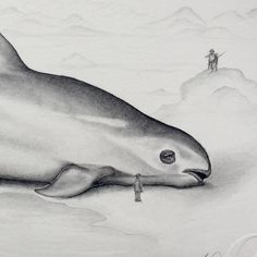 "Today is #worldenvironmentday and I wanted to highlight the little known Vaquita who's numbers are now at around 30 left (WWF). The rare porpoise is nearly extinct mainly due to illegal fishing. This is a detail of a drawing for my upcoming exhibition looking at the devastating effect of mans greed on non human animals. This is ""The Last Vaquita"" a preventable future.- #greatexhibitionofthenorth #vaquita #naturalhistory #endangeredspecies #drawing #animalrights"