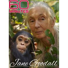 Jane Goddall and friend. An incredible women who, in her very early went off to Africa to study chimpanzees. Primates, Dian Fossey, Jane Goodall, Extraordinary People, Mundo Animal, Orangutan, Beautiful Creatures, Animal Kingdom, Cute Animals