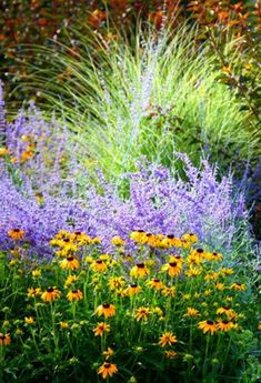 Grasses with Perovskia (purple, Russian Sage) and Rudbeckia (yellow, Black-Eyed Susan) Garden Shrubs, Garden Landscaping, Flower Colouring In, Russian Sage, Stipa, Black Eyed Susan, Ornamental Grasses, Companion Planting, Parcs