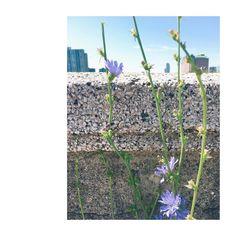 #summertime #roadsideflowers