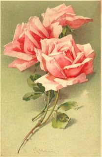 Coral-pink roses by Catherine Klein