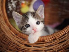 A cute kitty by Patrick Größ on 500px