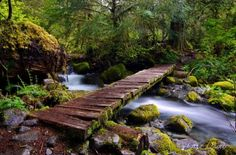 Near Gates, OR you'll find the Opal Creek ancient forest