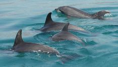 Dolphins, Comporta Portugal