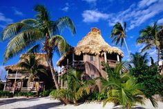 Resort buildings and palm trees, Ambergris Cave. Belize