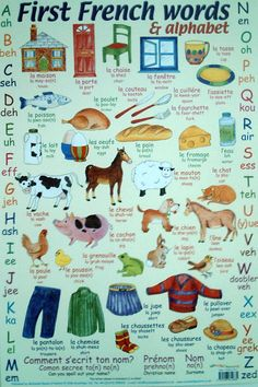 french - words & alphabet language children's educational poster