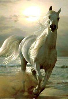SFR Mail Caballos t Horses Andalusian Horse y Animals Cute Horses, Pretty Horses, Horse Love, Most Beautiful Horses, Animals Beautiful, Cute Animals, Pretty Animals, Unique Animals, Cavalo Wallpaper