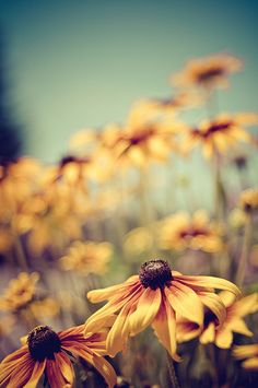 Flower, yellow,
