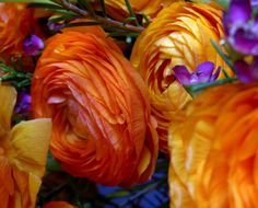 Ranunculus bouquet...