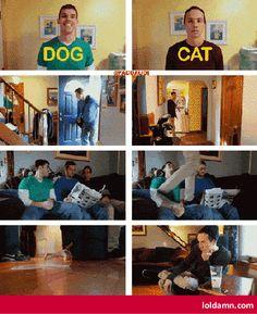 Dog & Cat Roommates