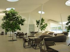 office tree. Indoor Tree Wells Why Wouldnu0027t You Do This Ask Us At Www Office