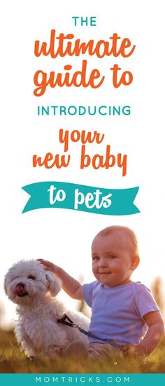 Bringing a new baby home to your cat or dog is always a little anxiety-provoking. Here's how to best introduce your baby to a dog or cat! Cat Care Tips, Dog Care, Dog Anxiety, Kitten Care, The Perfect Dog, Dog Hacks, Old Dogs, Dog Training Tips, Happy Dogs