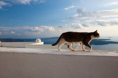 Greek sun cat.