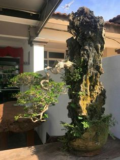 Bonsai at home: how to properly care for the dwarf trees Ferns Garden, Garden Trees, Lawn And Garden, Trees To Plant, Garden Art, Bonsai Art, Bonsai Plants, Garden Terrarium, Bonsai Garden