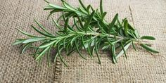 Rosemary: Benefits for brain health, pain, cancer, inflammation, and more   www.thenutritionwatchdog.com