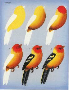 BIRDS - Oksana Volkova - Álbumes web de Picasa