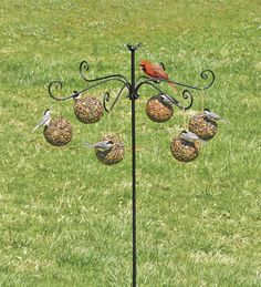 Imagine how  many birds you can feed at once with this Six-Arm Bird Feeder And Hanging Seed & Nut Balls from Plow & Hearth!