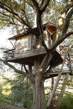 San Francisco Treehouse. A treehouse built 7.6 meters up in a 125-year-old coast live oak. Recycled, reclaimed and vintage materials have been used in the making. The whole construction has been put up in the tree without using any bolts or nails; therefore, not damaging the tree. The treehouse is truly magical because of its rustic interior and small details reminding of childhood. Located in Burlingame, San Francisco Bay, CA.
