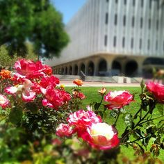 """Stopping to smell the roses at SDSU"""