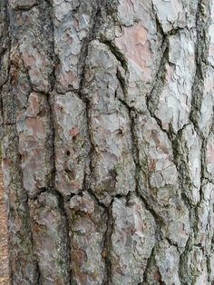 structuur boomschors.  De manier waarop iets gebouwd of samengesteld is. Hoe iets in elkaar zit. De bouw. De manier waarop een samengesteld geheel is opgebouwd.