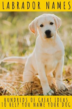 Labrador Names: Hundreds of Great Ideas to Help You Name Your Dog Labrador Names, Fox Red Labrador, Labrador Retriever, Puppy Names, Dog Names, Your Name, Labs, Dog Training, Your Dog