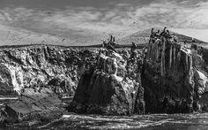 Islas Ballestas IV - Javier Porras
