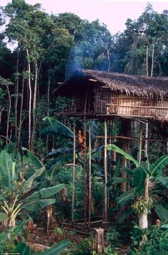 The tribe are known for their distinctive stilted treehouses that tower over some of the most remote rainforest in the world