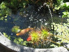 Yes! Step by step process for setting up my bath fish pond!