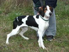LILA is a Treeing waker Coonhound which is a breed that loves people. Gentle and a bit shy , she wonderful with people & other dogs , and doesn't mind cats !This breed makes an exceptionally good family dog .They are playful  & interactive , but...
