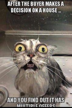 Super Funny Cute Cats Hilarious So True 28 Ideas Memes Humor, Funny Animal Memes, Funny Animal Pictures, Funny Animals, Cute Animals, Funny Memes, Hilarious Pictures, Animal Pics, Cats Humor