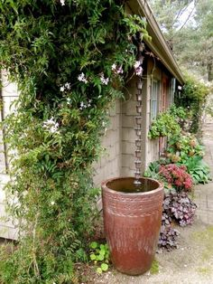 Rain chain into a rain barrel. So much prettier than a gutter/downspout. I already have the rain chain ~R Rain Garden Design, Front Yard Flowers, Flowers Garden, Water Barrel, Garden Cottage, Dream Garden, Backyard Landscaping, Landscaping Ideas, Garden Inspiration