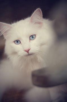 White beauty!   www.ovenbakedtradition.com