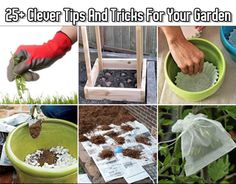 25+ Clever Tips And Tricks For Your Garden
