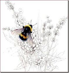 Bombus hortorum The Garden Bumble Bee - Valerie Littlefield, artist.