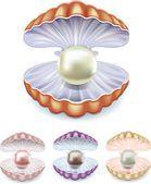 Conjunto de pérolas em conchas de cores diferentes —  Vetores de Stock #8171279